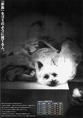 s-inu02.jpg